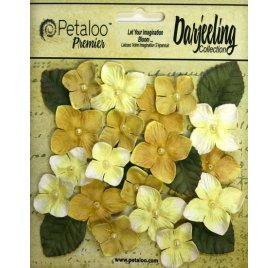 Fleurs 'Petaloo - Darjeeling Collection' Hydrangeas Jaune Qté 24