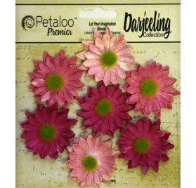Fleurs 'Petaloo - Darjeeling Collection' Mini Daisy Rose Qté 7