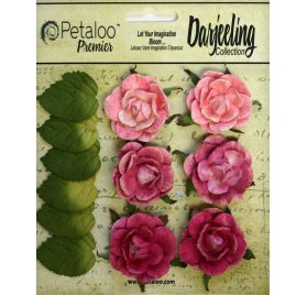 Fleurs 'Petaloo - Darjeeling Collection' Garden Rosette Rose Qté 6